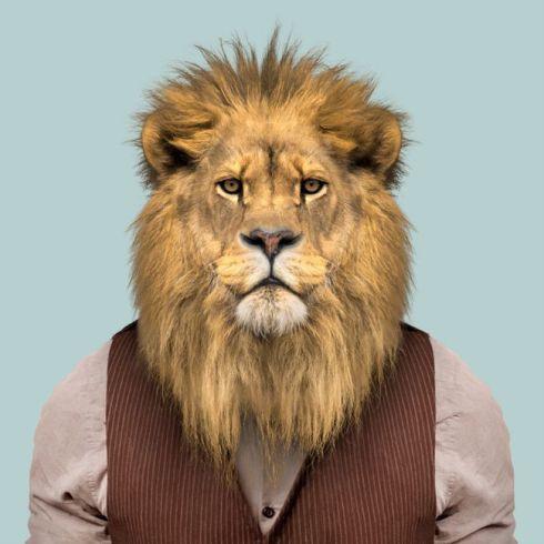 Lion-Panthera-Leo